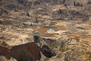 Colca-Canyon-42