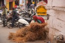 GB13_India_Udaipur_Blog-68