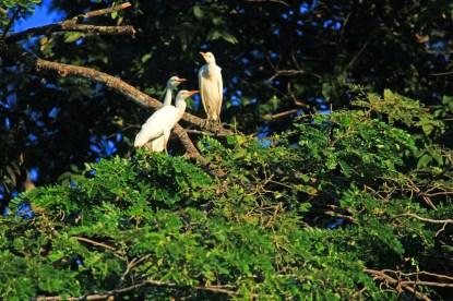 CR White Bird 2