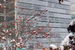 February 7, 2013: Snowy Day