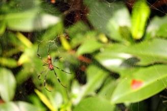 November 28, 2012: Costa Rican Spider