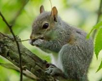 Jun-1_squirrel-1-7