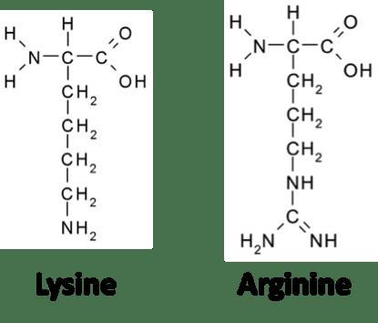 Lysine & Arginine