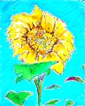 Sunflower I 8x10 / 2010