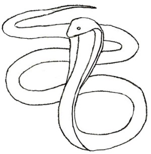 snake drawing cobra draw easy head sketch drawings step animals furious evil forest clipart vertical drawn clipartmag few yedraw