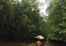 Travel to Puerto Princesa – Mangrove Paddle Boar Tour