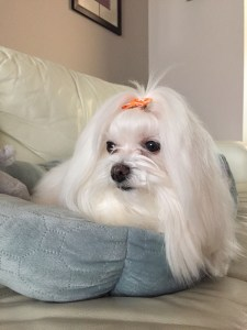 Mendoza's Lovely Dog - Paige