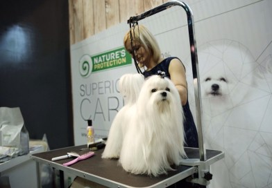 A fur-fect start to 2019: Asia's biggest dog show returns to Smart Araneta Coliseum