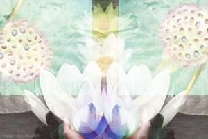 grow-your-lotus_web