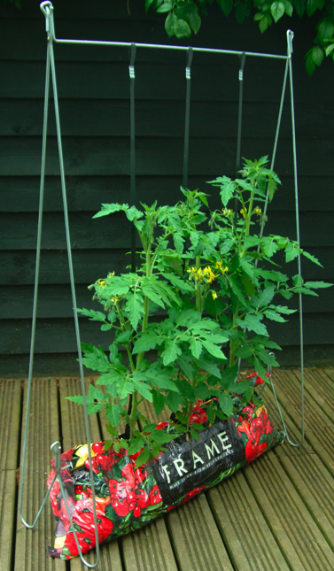 Tomato Growing System  Garden Products  Advice from