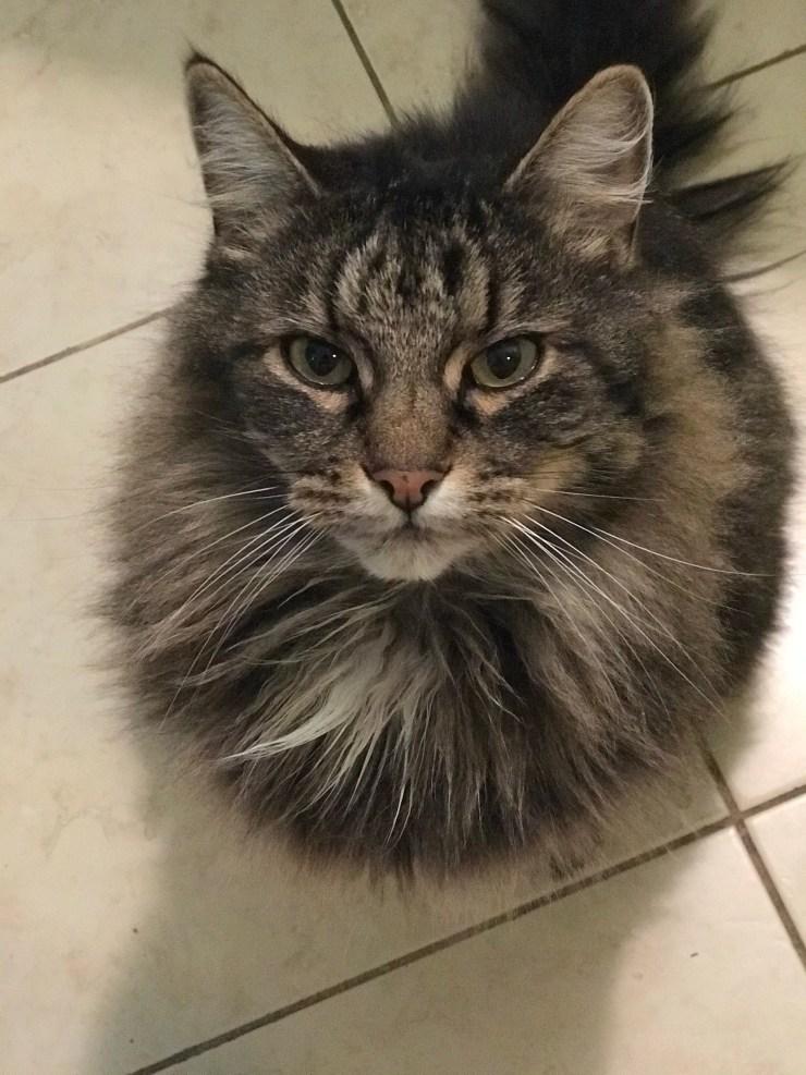Cat (Magnum)
