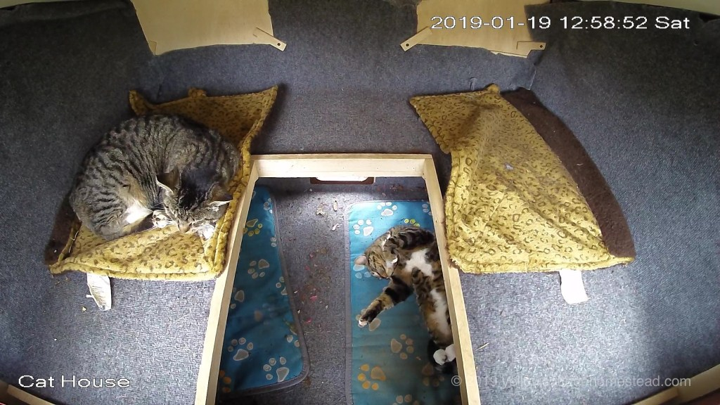 Cats inside
