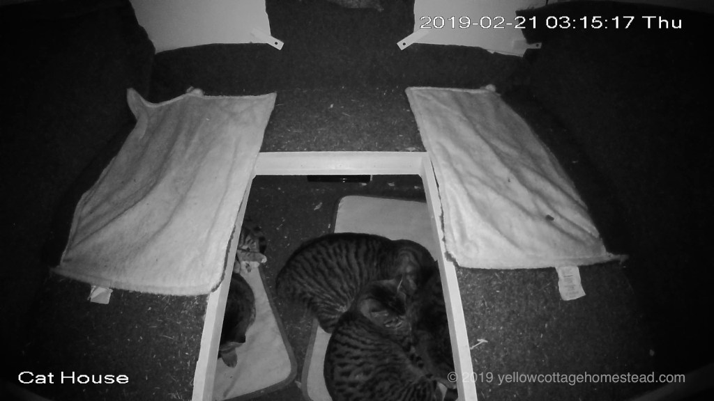 Cat snuggle pile