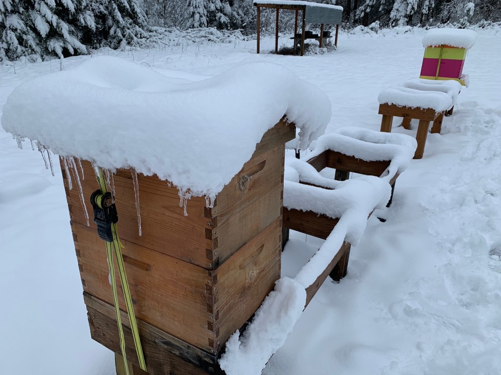 Snow on beehives