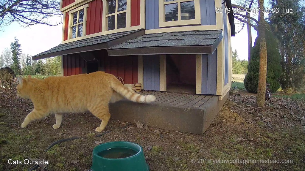 Orange cat encounter