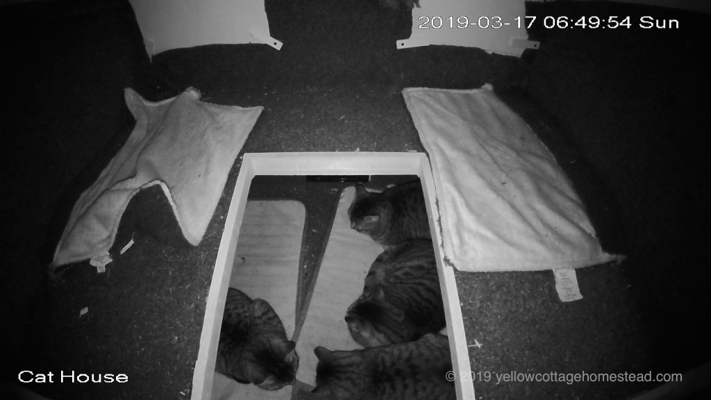 Four cats inside shelter