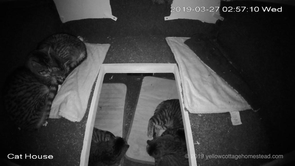 Five cats