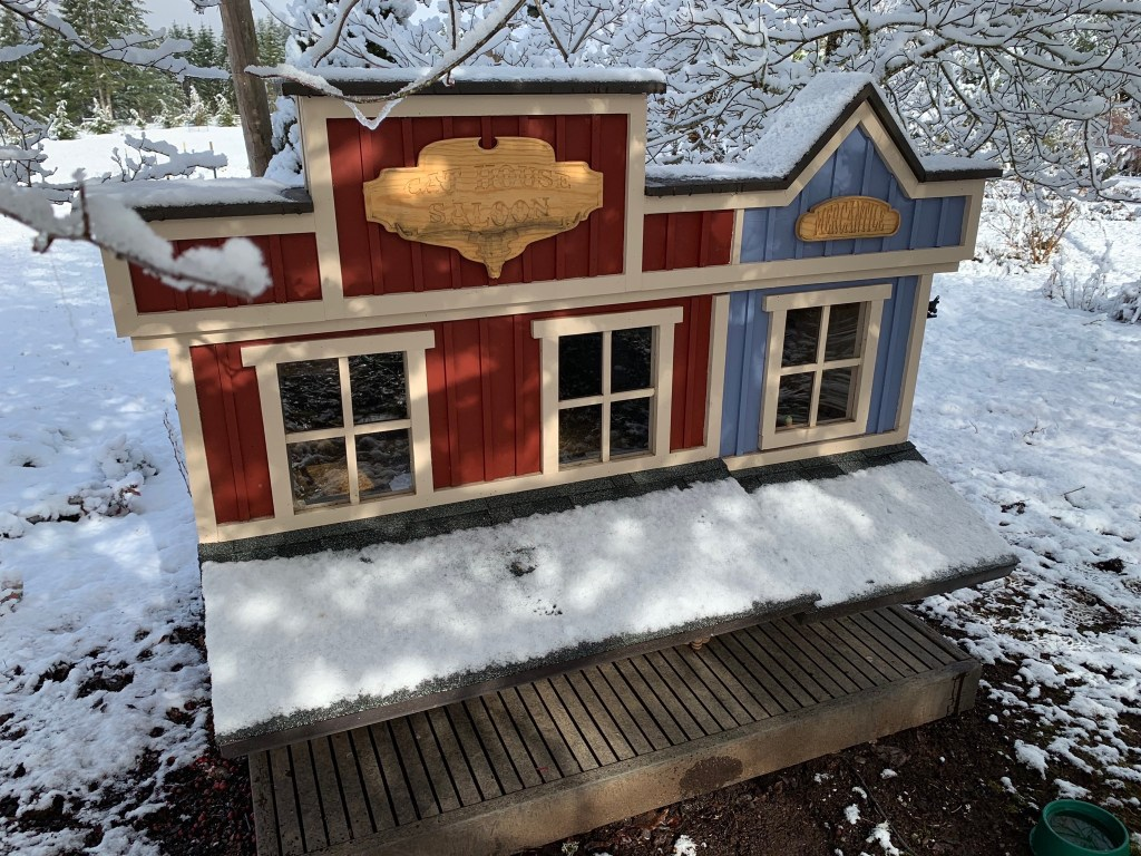 Snowy cat house