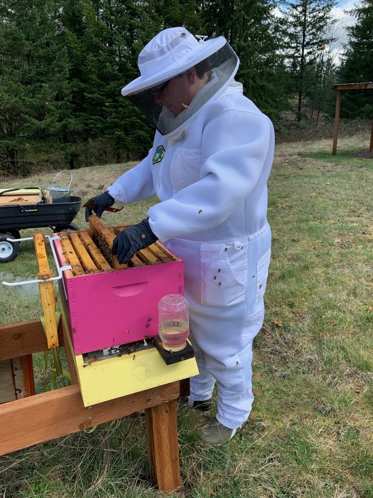 Jenn inspecting beehive