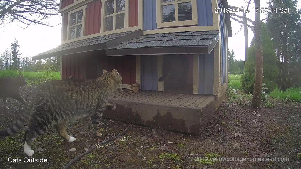 Three cats arrive