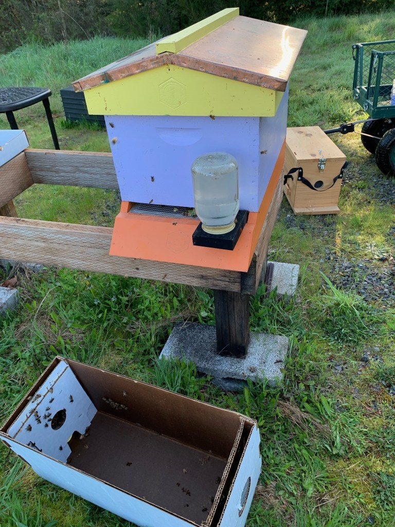 Bees installed