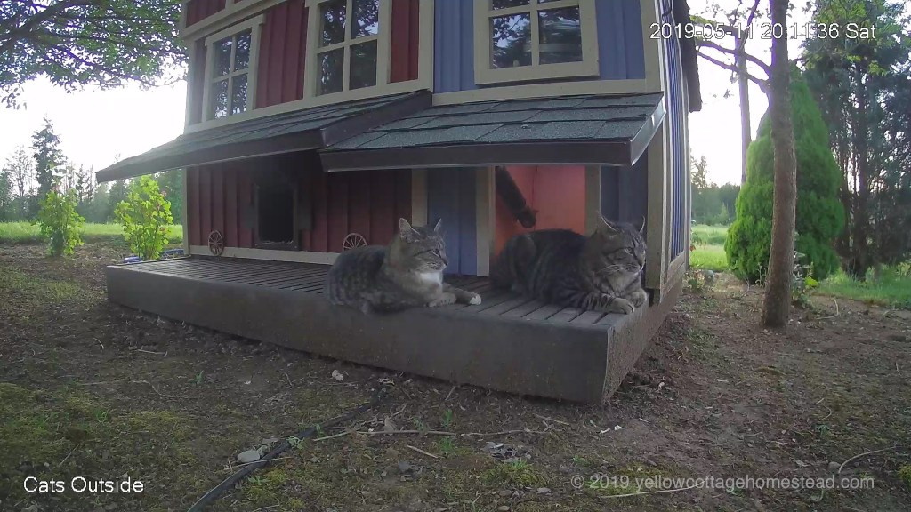 Two cats on the deck