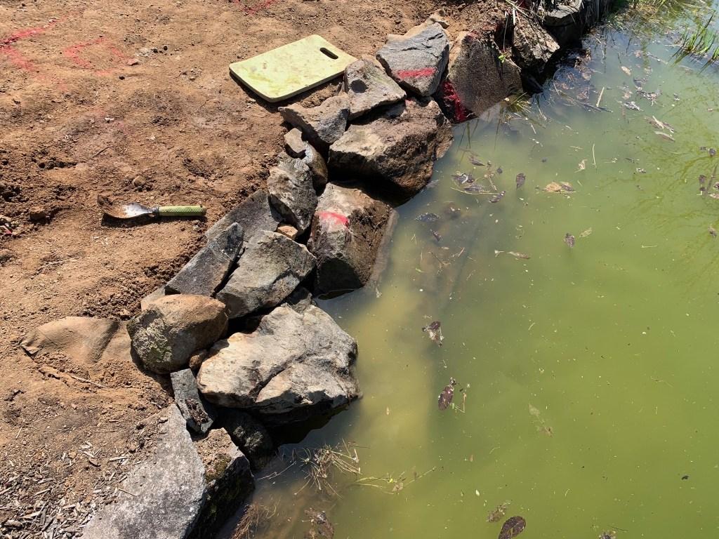 Adjusted pond edge