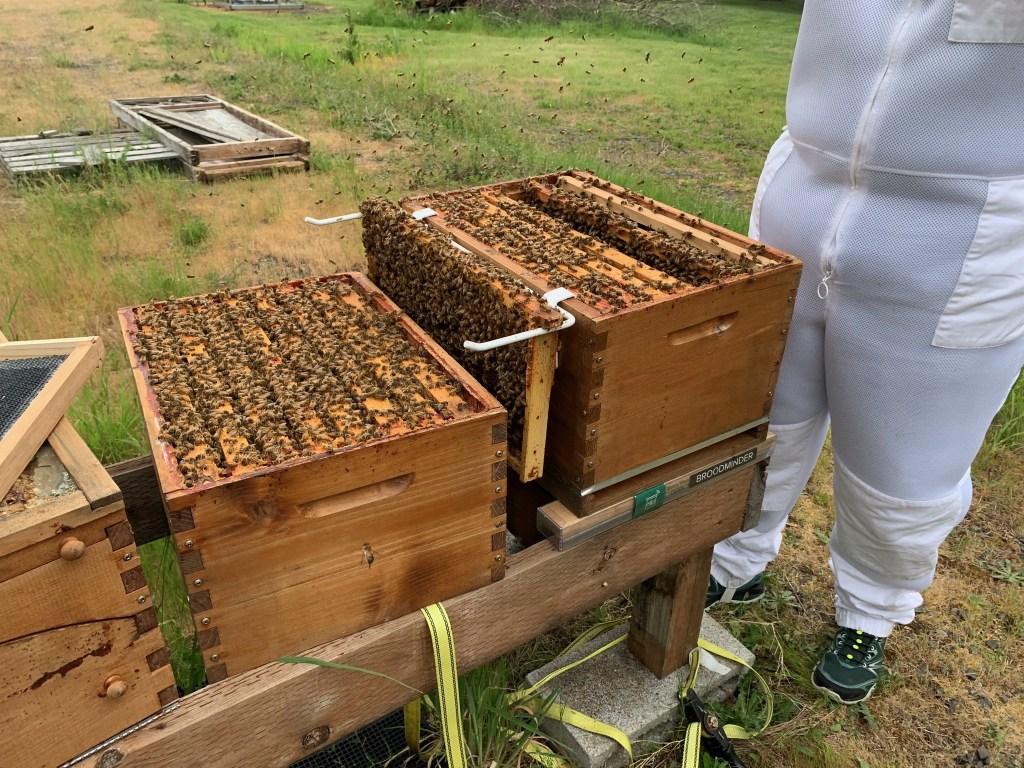 Cranky bees