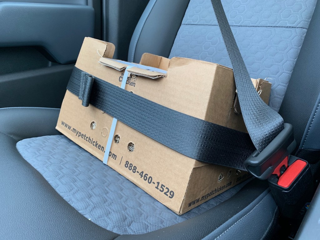 Box of chicks in car seat
