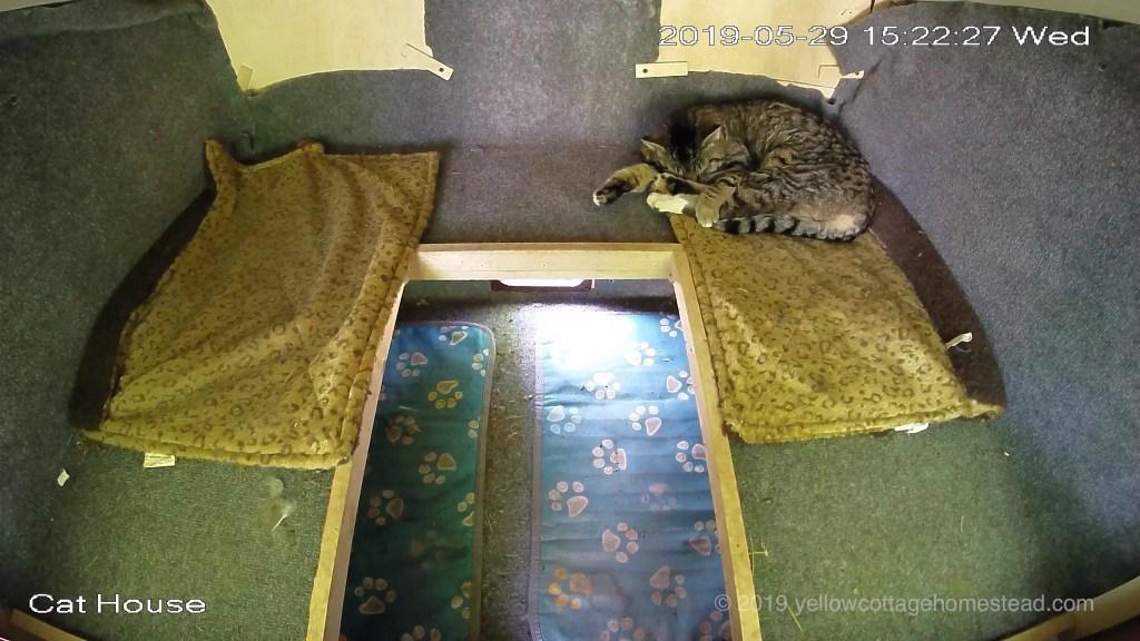 Cat inside