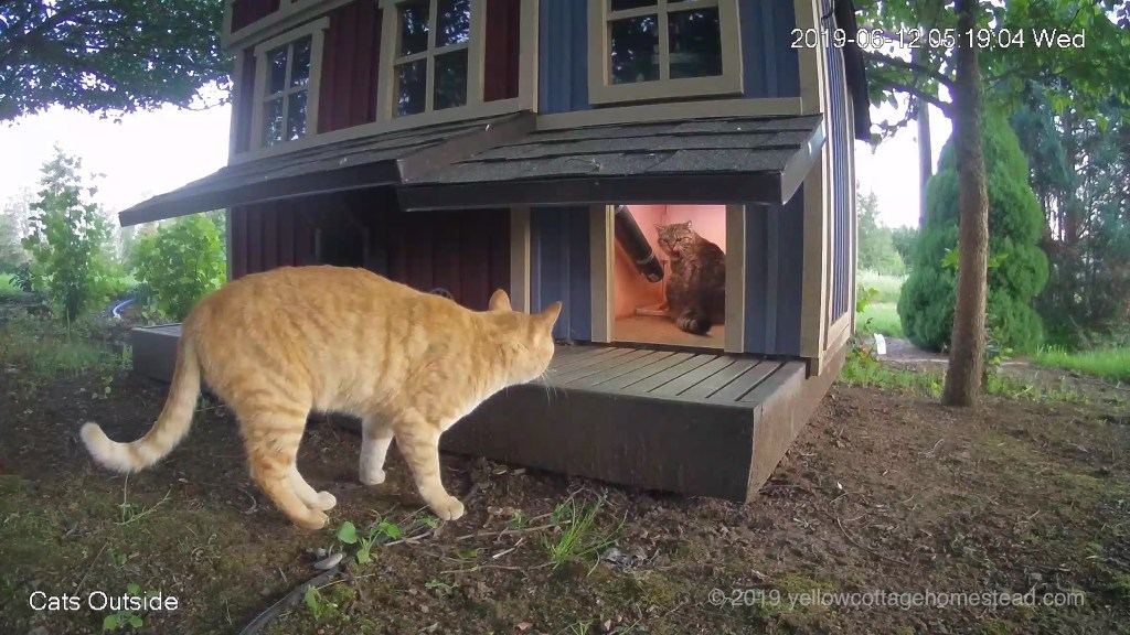 Orange cat & Poppy encounter