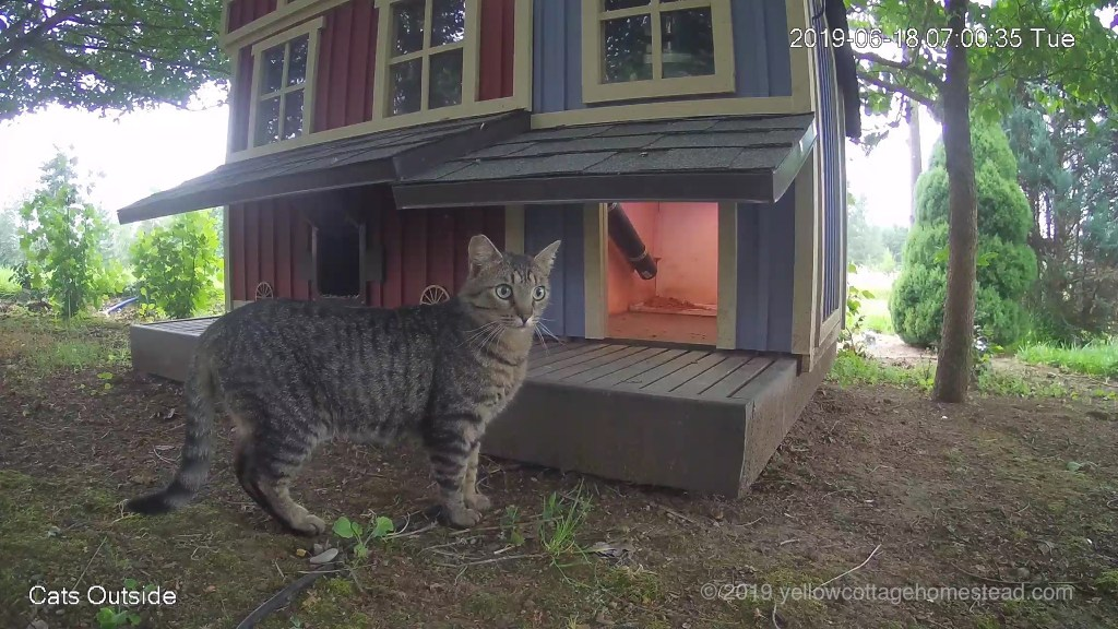 Cat in front of shelter