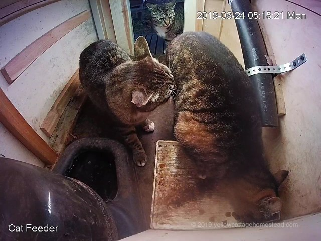 Three cats in the feeder