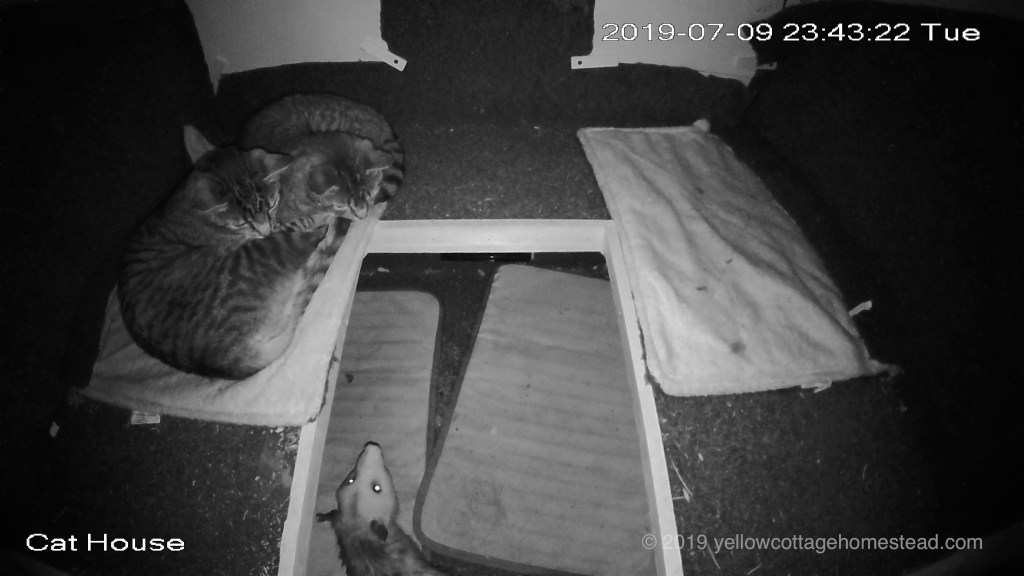 Possum in shelter with cats