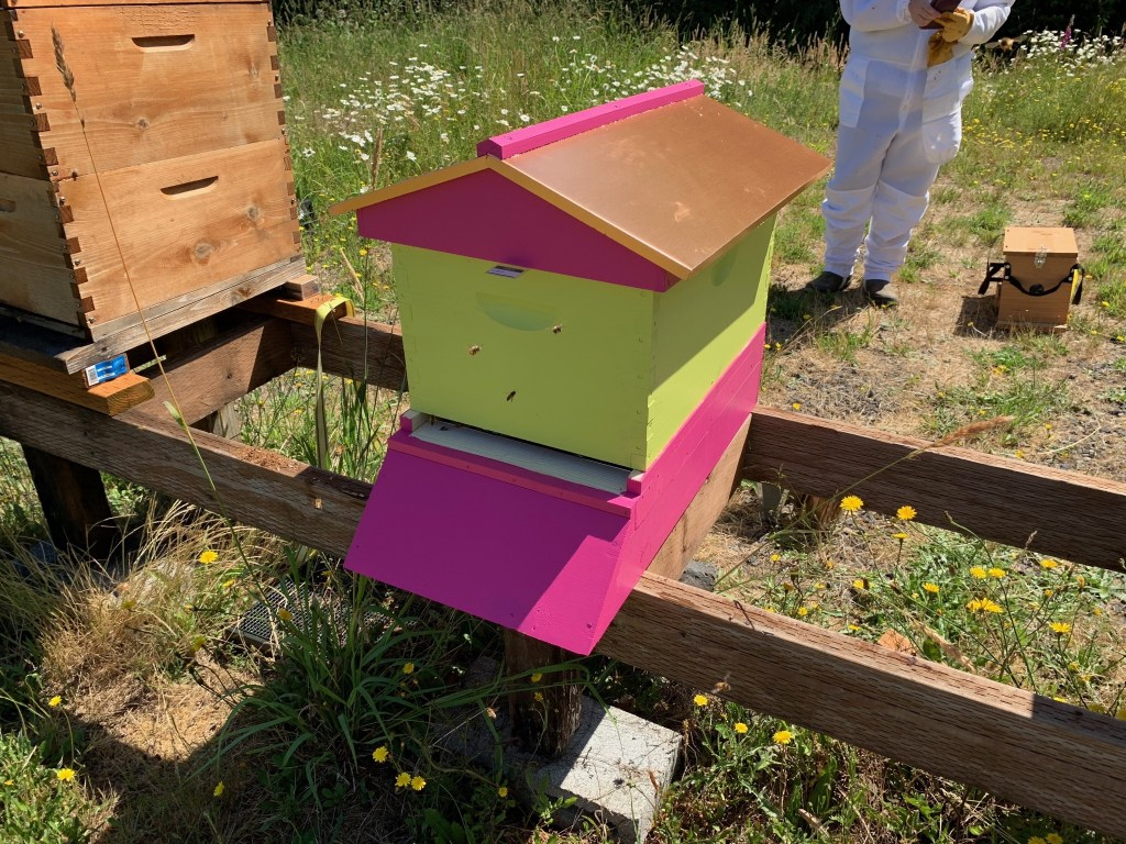 New hot pink hive
