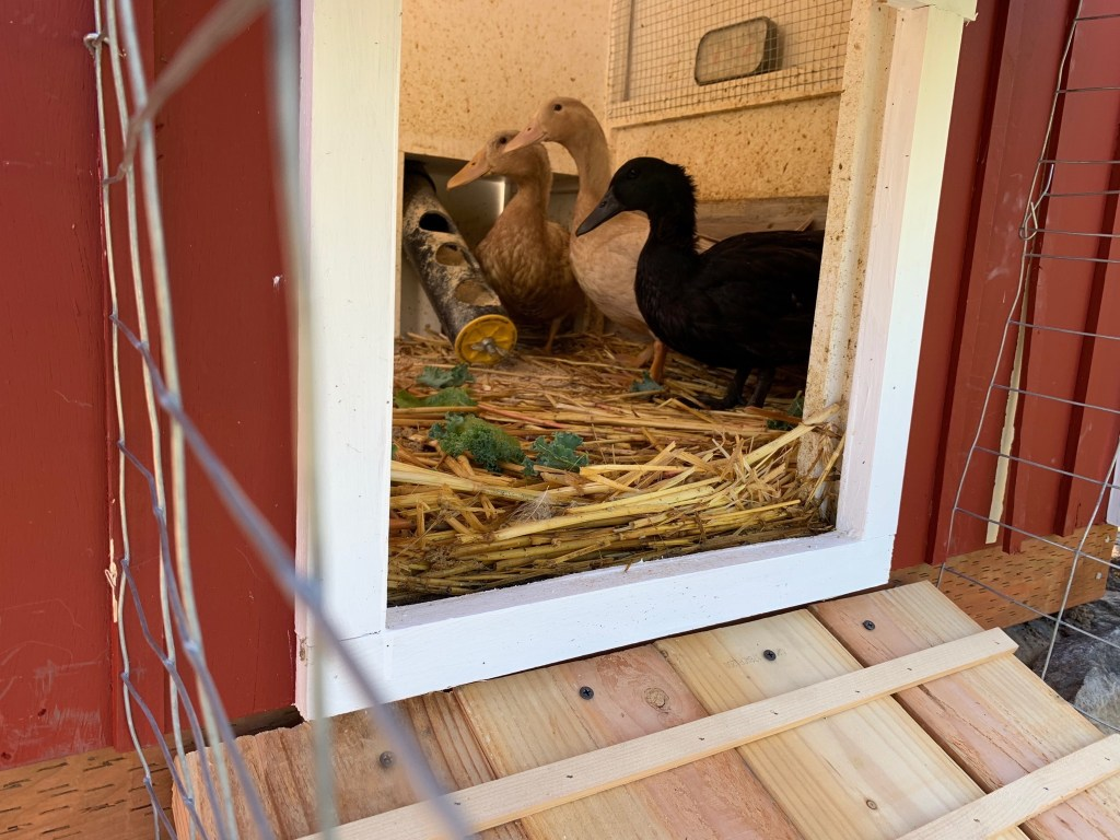 Ducklings through doorway