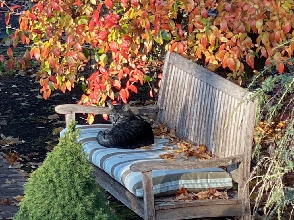 Cat on bench by fountain