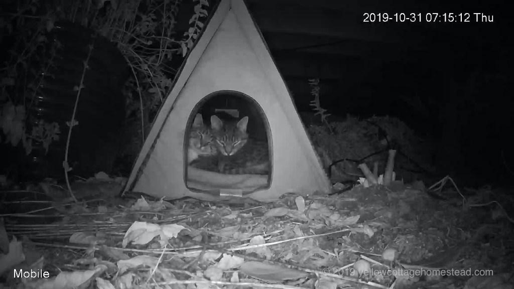 Two snuggled in cabin
