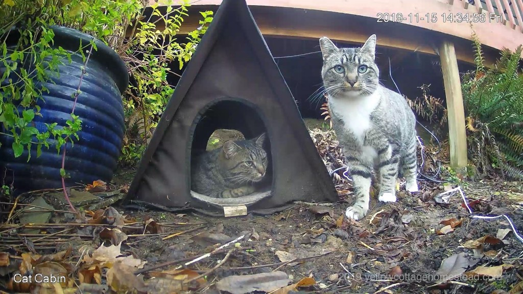 Two cats at the cabin