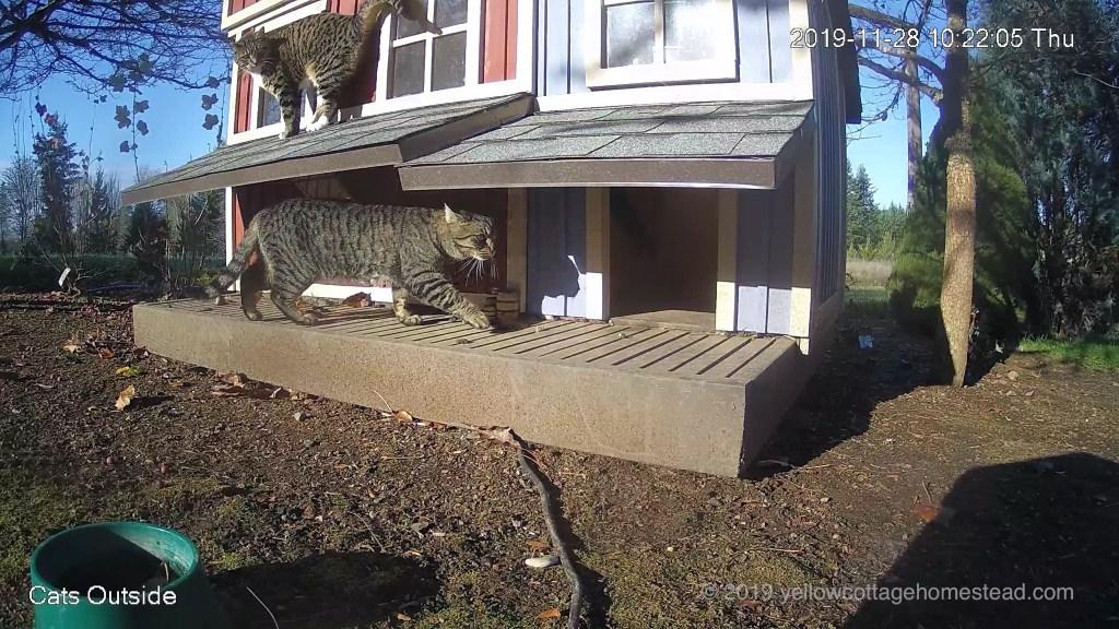 Double-decker cats