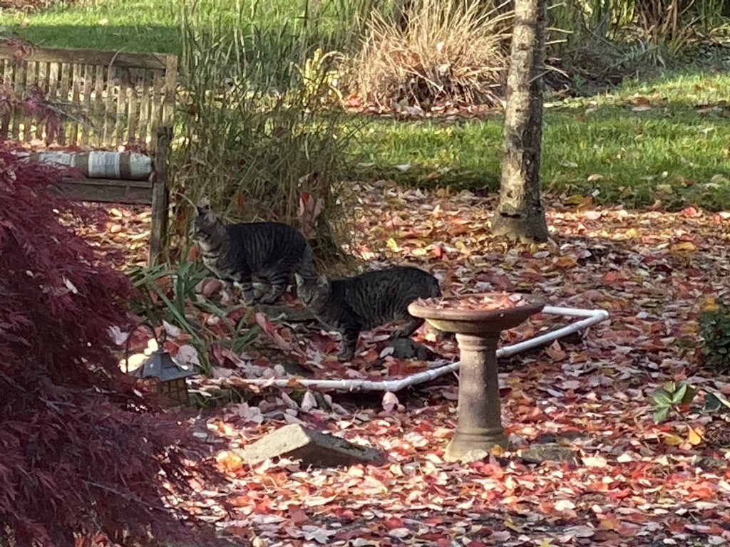Cats by small pond