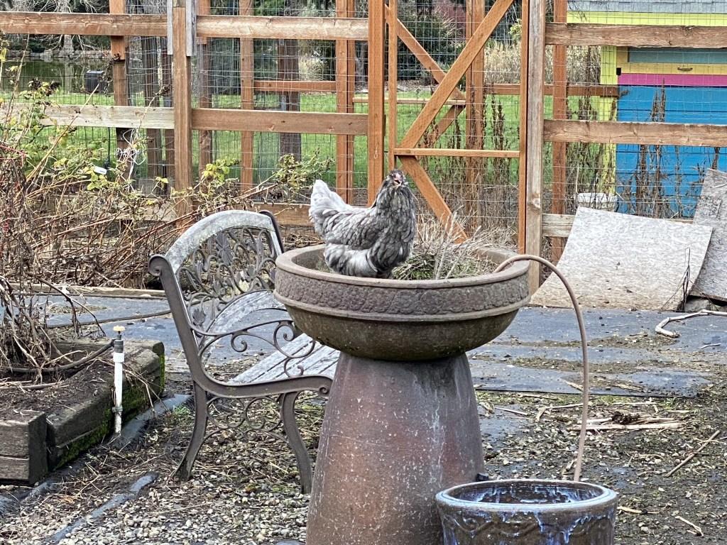 Martha in pot