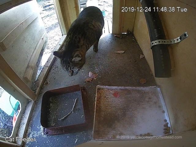 Cat investigating