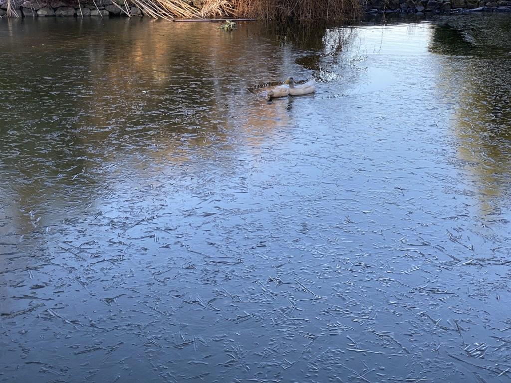 More frozen pond