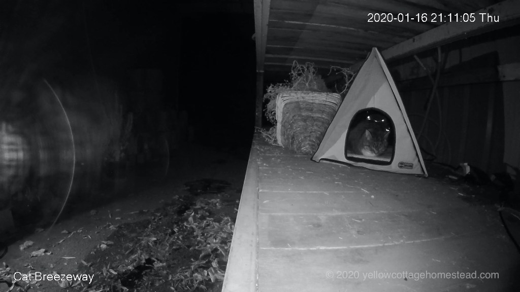 Bella in cabin