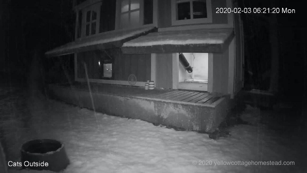 Pumpkin watching snow