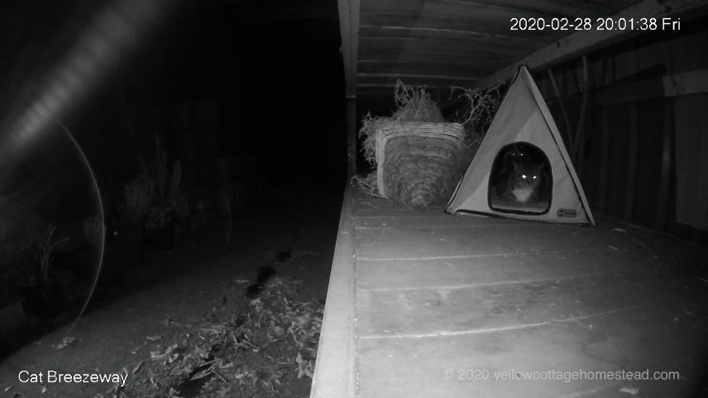 Poppy in cabin