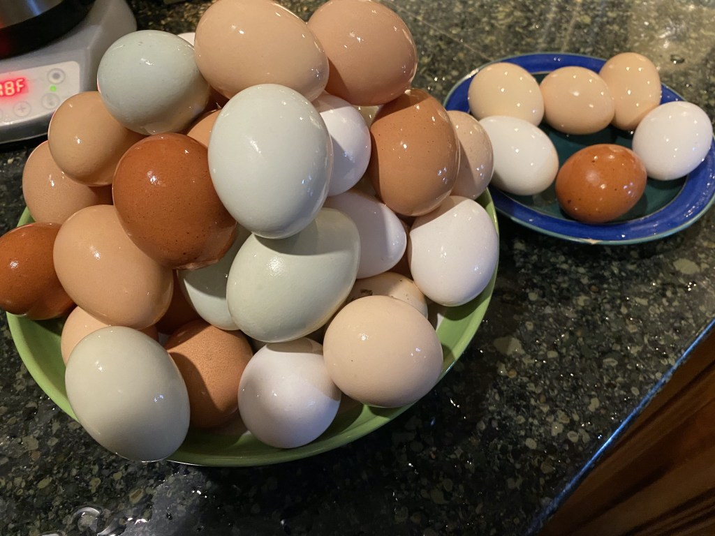 Four dozen eggs