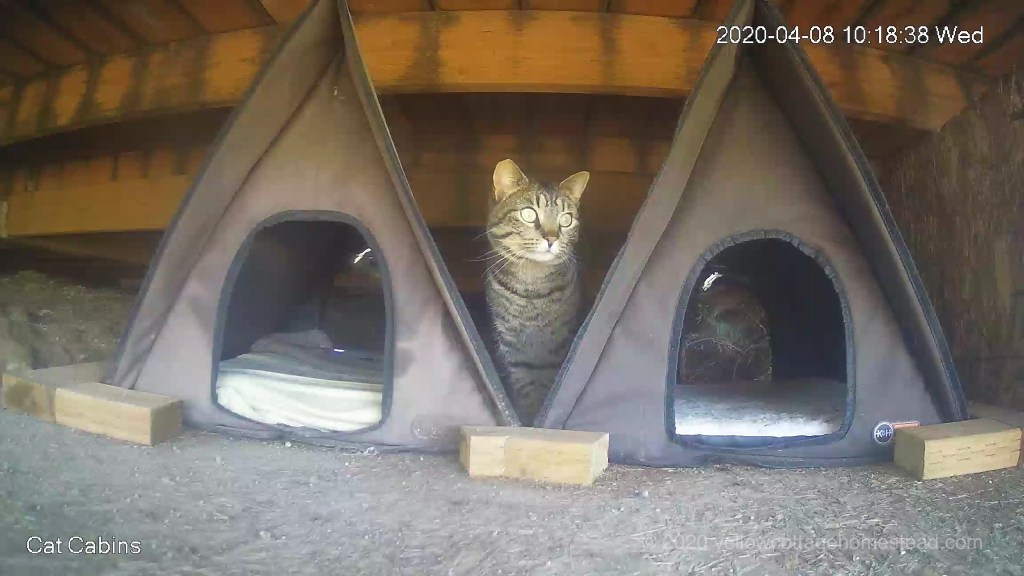 Cat between cabins