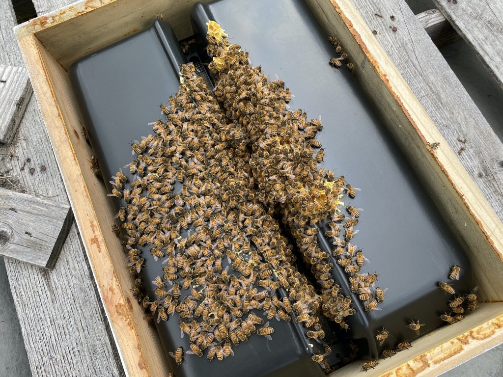 Yellow hive: bees on bottom of feeder